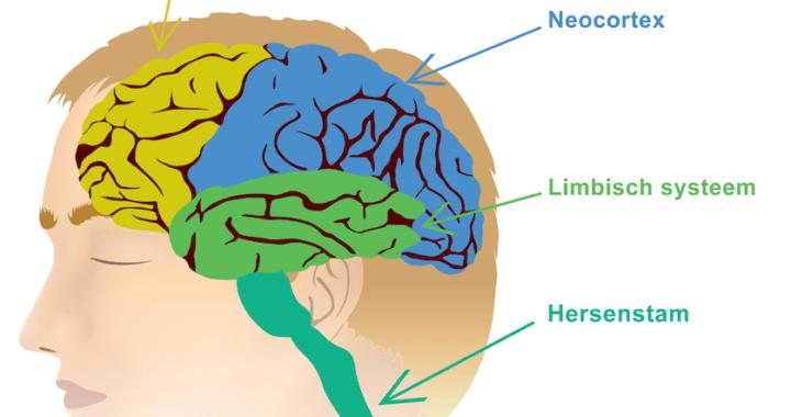 8-weken cursus Mindfulness en de werking van ons brein